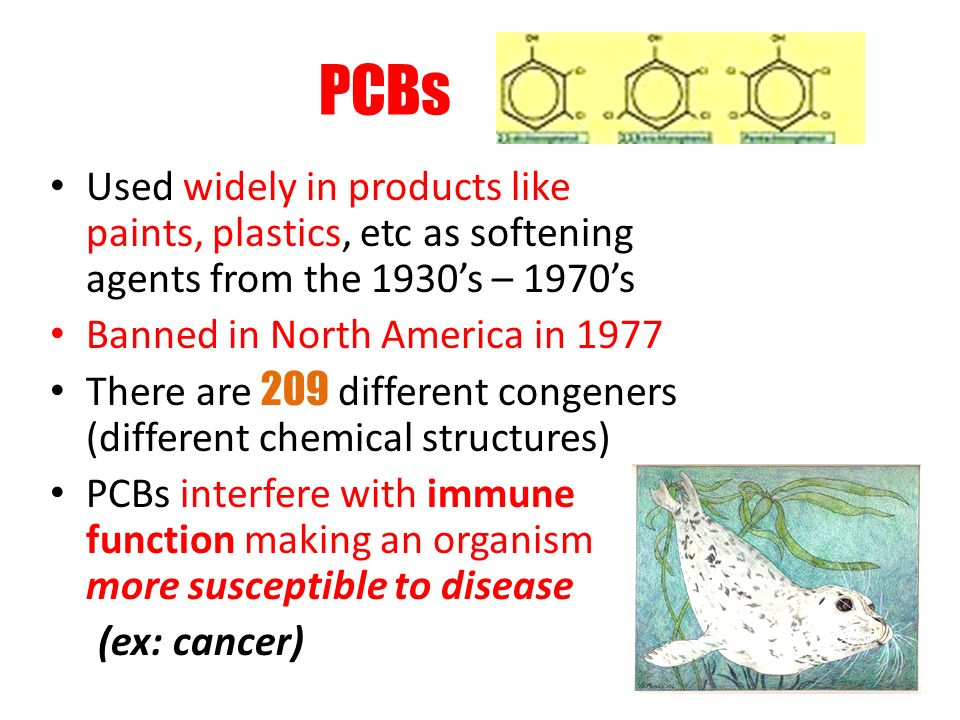 PCBs Used widely in products like paints, plastics, etc as softening agents from the 1930s – 1970s Banned in North America in 1977 There are 209 different congeners (different chemical structures) PCBs interfere with immune function making an organism more susceptible to disease (ex: cancer)