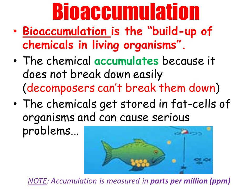 Bioaccumulation Bioaccumulation is the build-up of chemicals in living organisms.