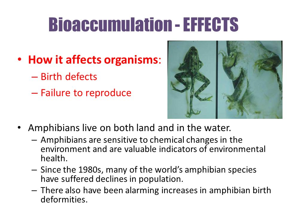 Bioaccumulation - EFFECTS How it affects organisms: – Birth defects – Failure to reproduce Amphibians live on both land and in the water.