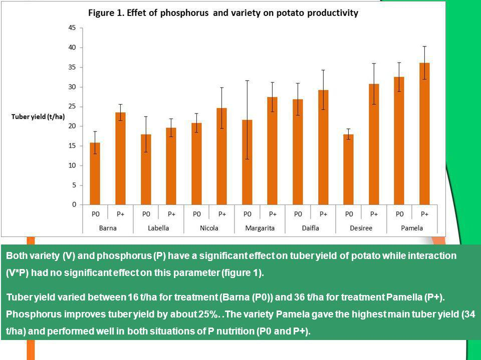 Both variety (V) and phosphorus (P) have a significant effect on tuber yield of potato while interaction (V*P) had no significant effect on this param
