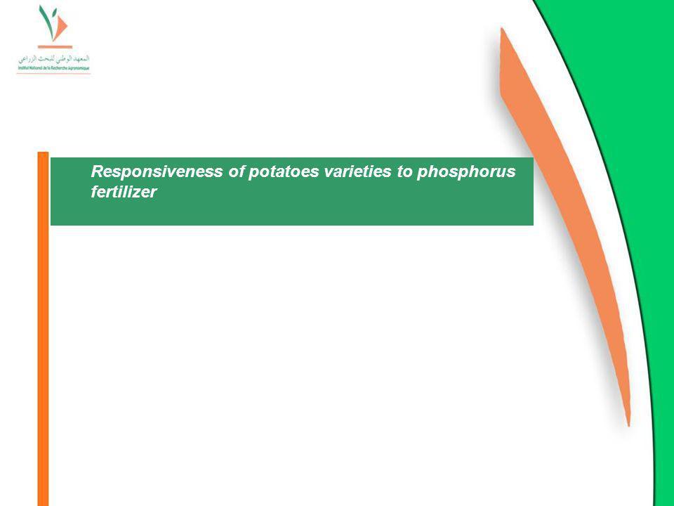 Responsiveness of potatoes varieties to phosphorus fertilizer