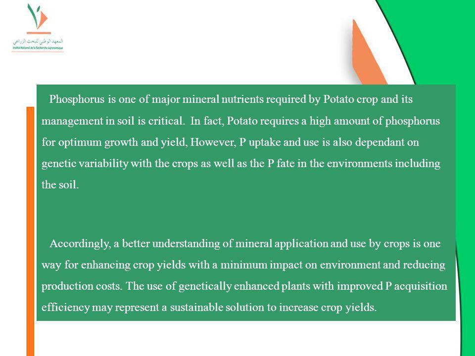 Phosphorus is one of major mineral nutrients required by Potato crop and its management in soil is critical. In fact, Potato requires a high amount of