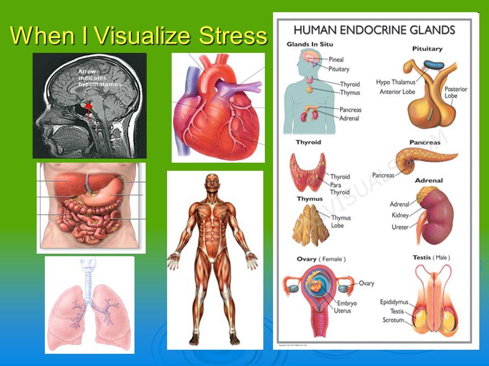 When I Visualize Stress