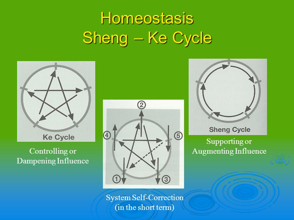 Homeostasis Sheng – Ke Cycle Controlling or Dampening Influence Supporting or Augmenting Influence System Self-Correction (in the short term)