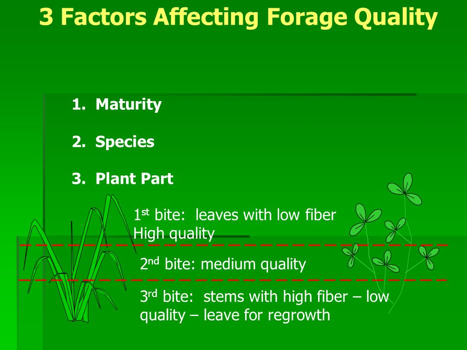 1 st bite: leaves with low fiber High quality 2 nd bite: medium quality 3 rd bite: stems with high fiber – low quality – leave for regrowth 1.