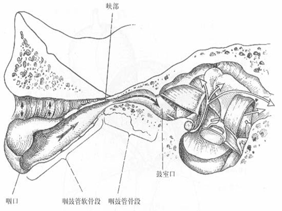 10 The eustachian tube ventilates the middle ear, protects it from pathogenic organisms in the nasopharynx, equilibrates pressure across the tympanic membrane, and allows drainage of secretions from the middle ear into nasopharynx.