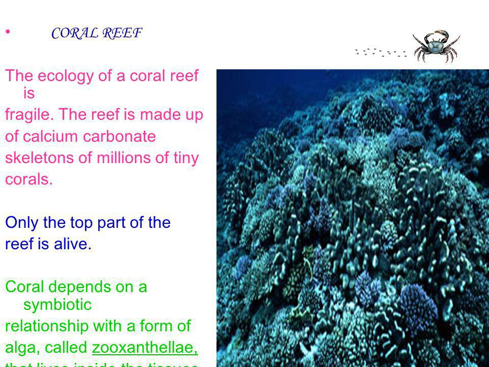 CORAL REEF The ecology of a coral reef is fragile. The reef is made up of calcium carbonate skeletons of millions of tiny corals. Only the top part of