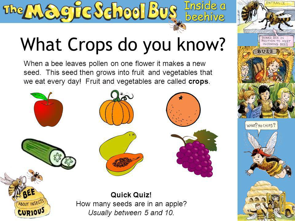 What Crops do you know? When a bee leaves pollen on one flower it makes a new seed. This seed then grows into fruit and vegetables that we eat every d
