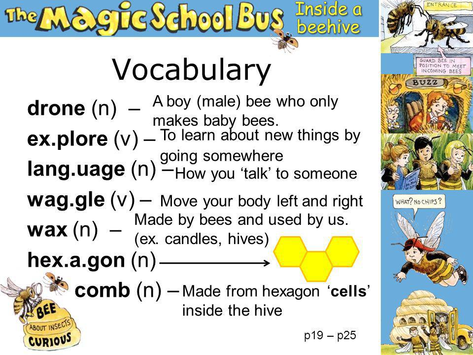 Vocabulary drone (n) – ex.plore (v) – lang.uage (n) – wag.gle (v) – wax (n) – hex.a.gon (n) comb (n) – A boy (male) bee who only makes baby bees. Made