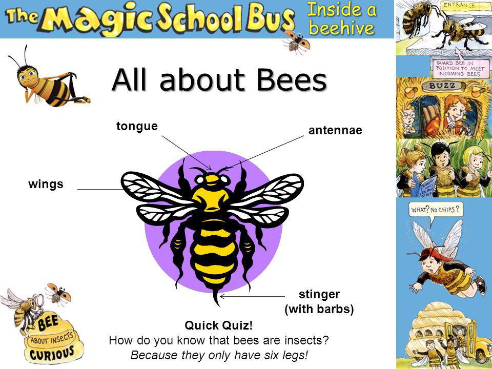 1.How does a larva become a bee.2.Why did the queen leave.