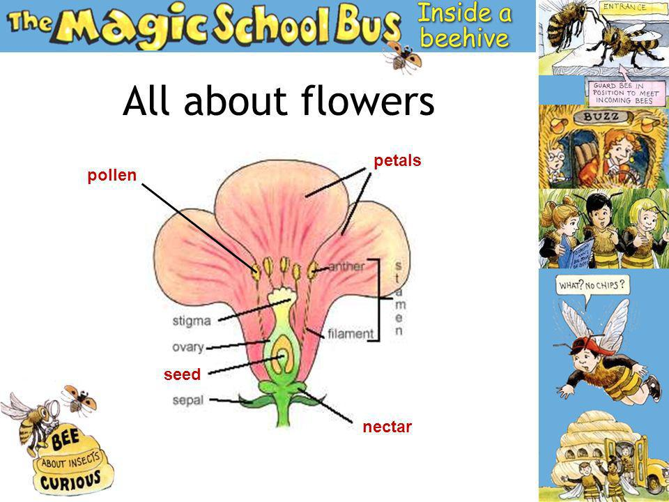 What Crops do you know.When a bee leaves pollen on one flower it makes a new seed.