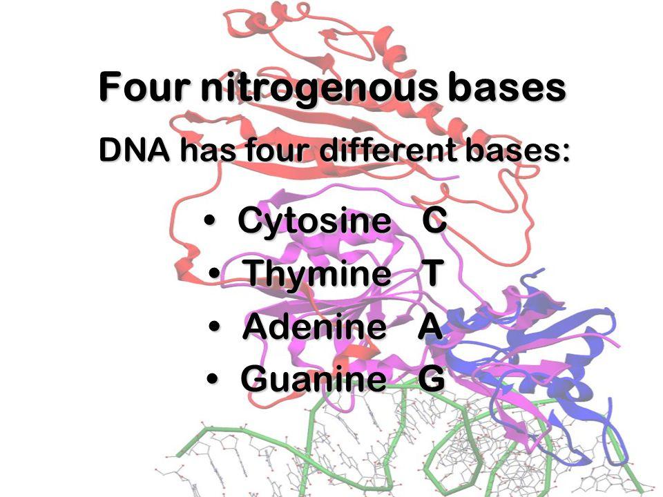 Hydrogen Bonds When making hydrogen bonds, cytosine always pairs up with guanine,When making hydrogen bonds, cytosine always pairs up with guanine, An