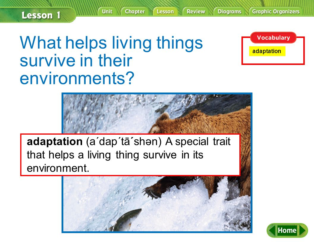 What helps living things survive in their environments? adaptation adaptation (a´dap´tā´shən) A special trait that helps a living thing survive in its