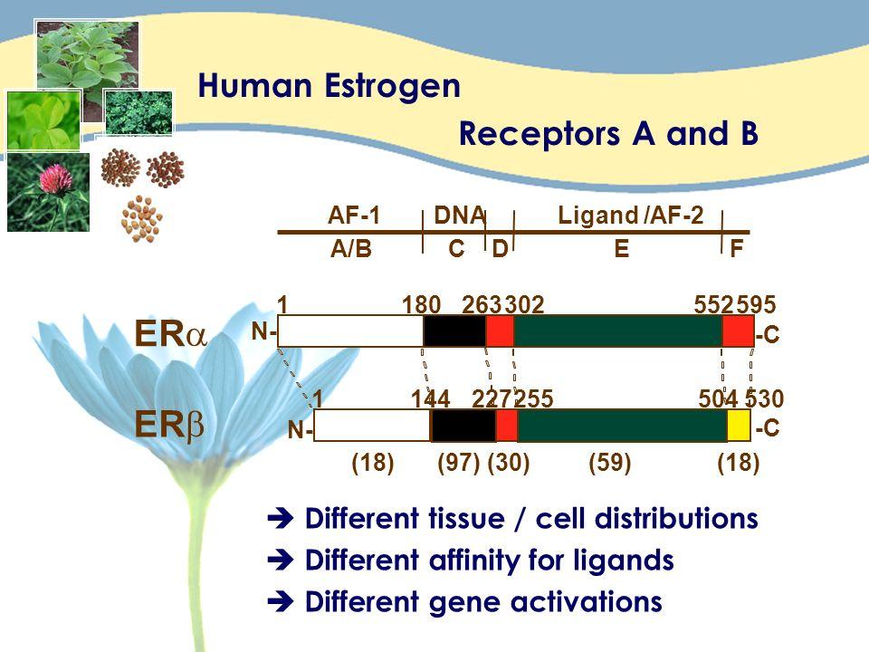 Pearce, S.T.; Jordan, V. C. The biological role of estrogen receptors alpha and beta in cancer.