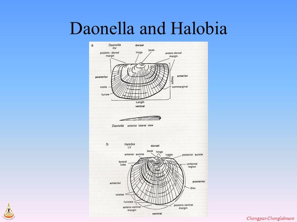 Chongpan Chonglakmani Daonella and Halobia