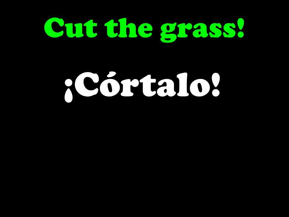 Cut the grass! ¡Córtalo!