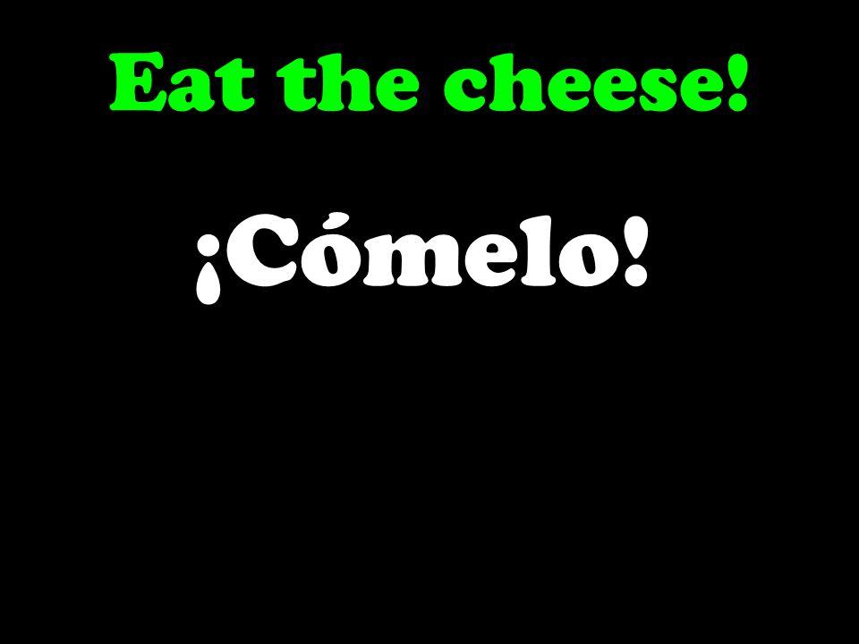 Eat the cheese! ¡Cómelo!