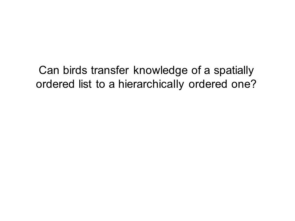 Can birds transfer knowledge of a spatially ordered list to a hierarchically ordered one?