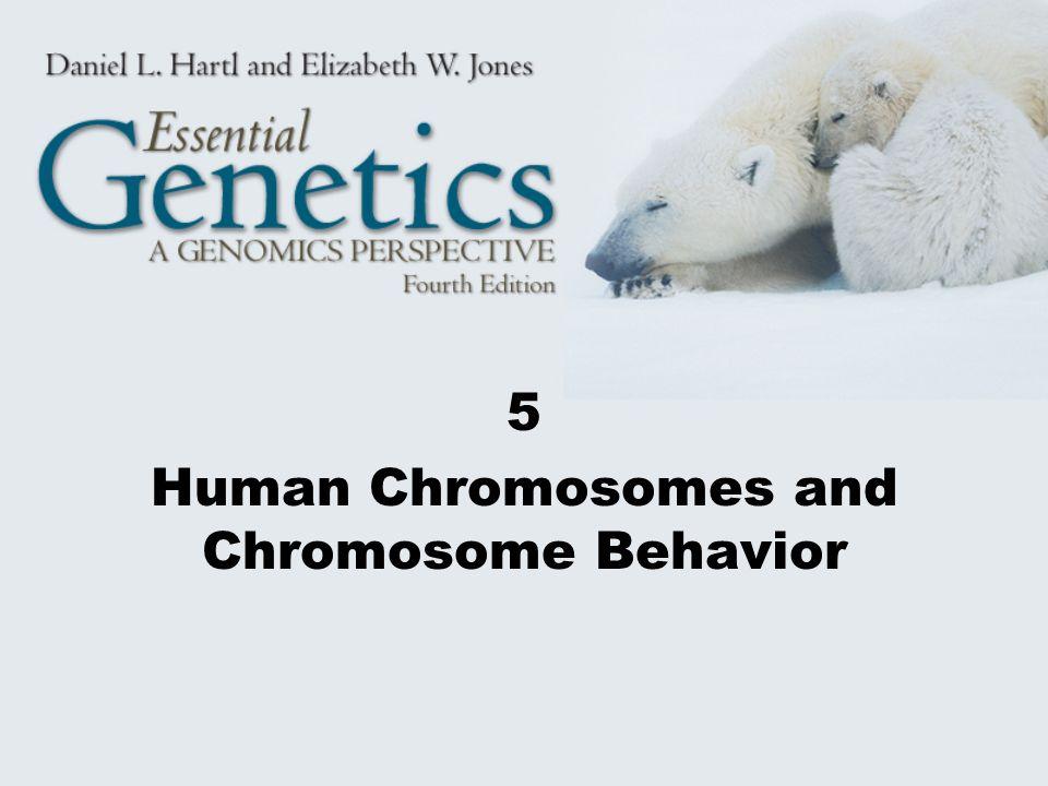 5 Human Chromosomes and Chromosome Behavior