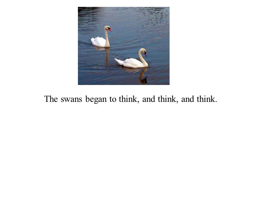 The swans began to think, and think, and think.