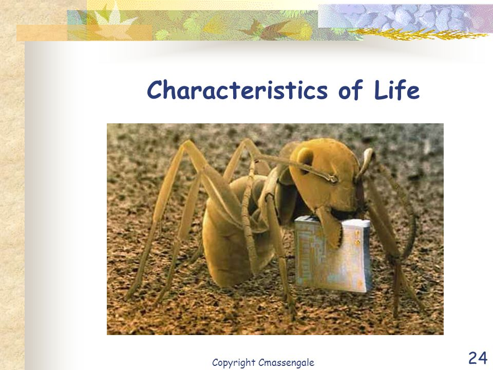 24 Characteristics of Life Copyright Cmassengale