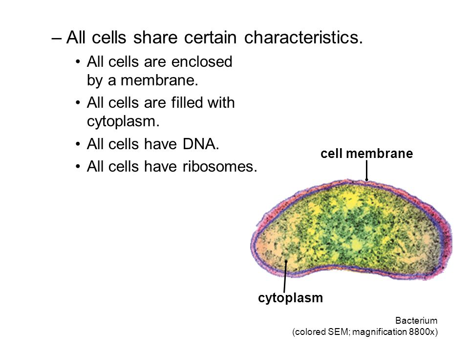 –All cells share certain characteristics. All cells are enclosed by a membrane. All cells are filled with cytoplasm. All cells have DNA. All cells hav