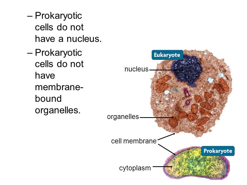 –Prokaryotic cells do not have a nucleus. –Prokaryotic cells do not have membrane- bound organelles. nucleus cell membrane organelles cytoplasm