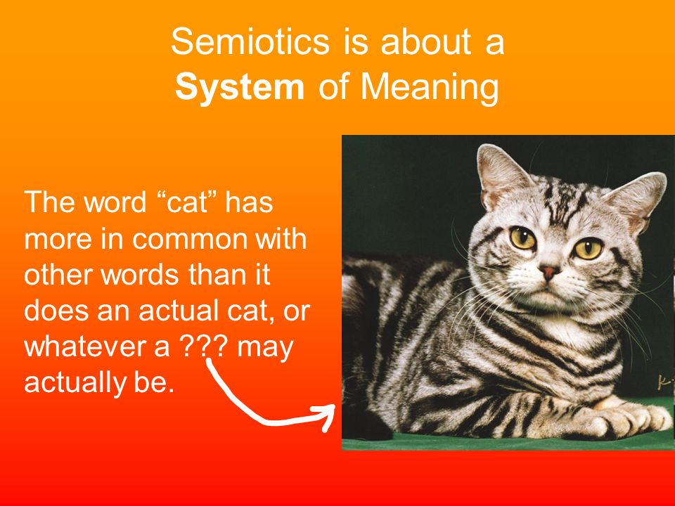 Semiotics is about a System of Meaning The word cat has more in common with other words than it does an actual cat, or whatever a ??? may actually be.