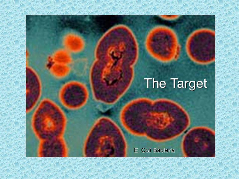 The Target E. Coli Bacteria