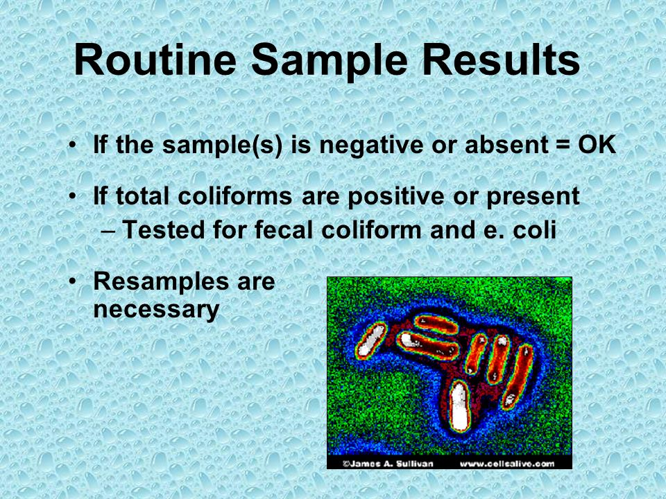 Routine Sample Results If the sample(s) is negative or absent = OK If total coliforms are positive or present –Tested for fecal coliform and e. coli R