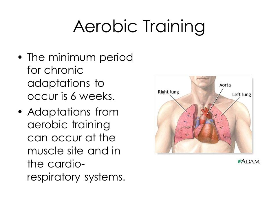 Chronic adaptations to Aerobic training CARDIOVASCULAR ADAPTATIONS LOWER RESTING HEART RATE Resting heart rate is very useful in determining aerobic fitness.
