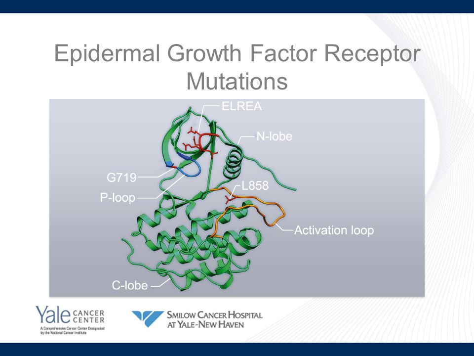 Epidermal Growth Factor Receptor Mutations