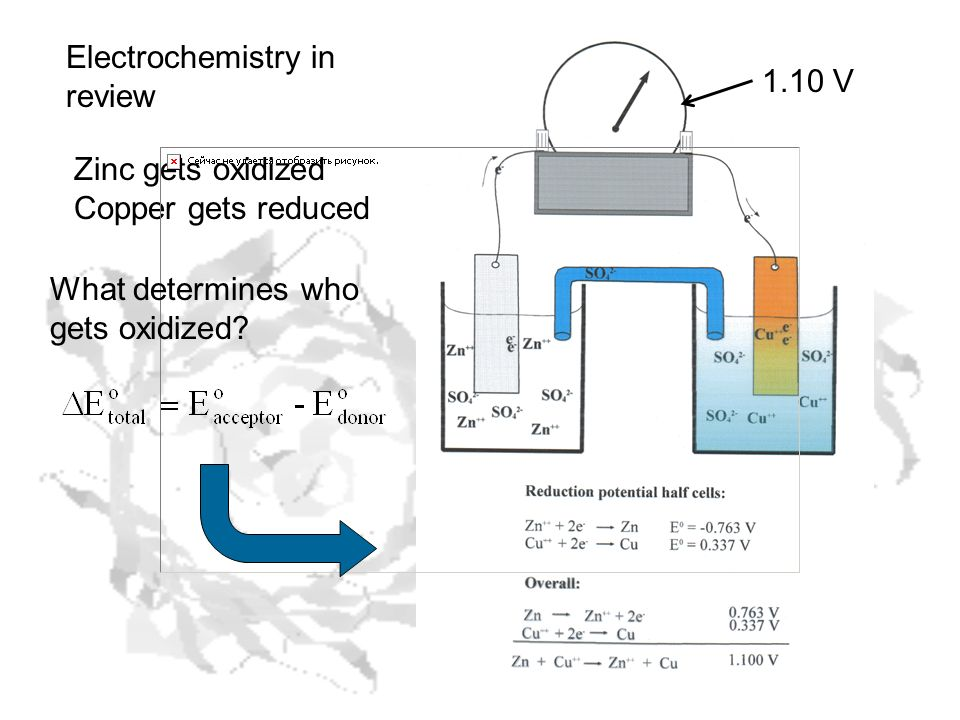1.10 V Electrochemistry in review Zinc gets oxidized Copper gets reduced What determines who gets oxidized?