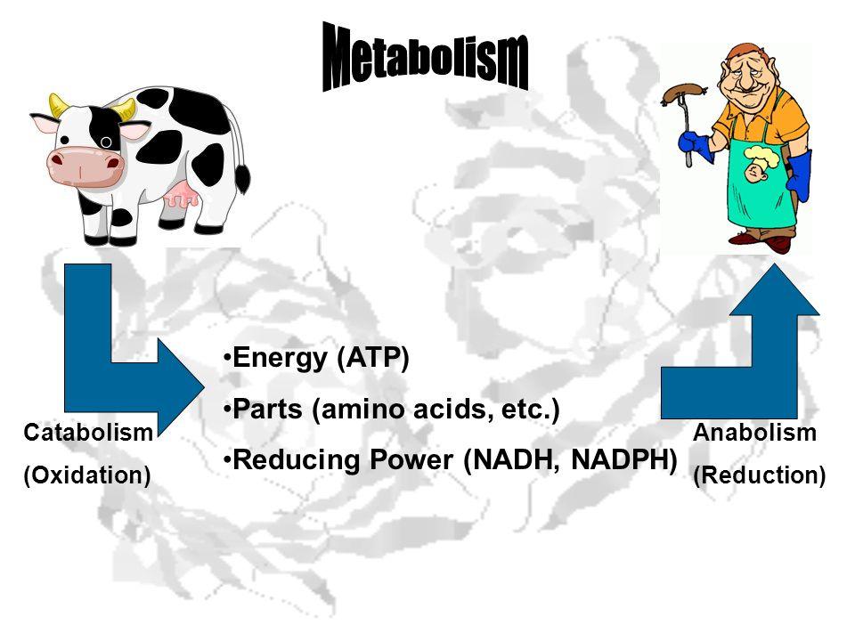 Energy (ATP) Parts (amino acids, etc.) Reducing Power (NADH, NADPH) Catabolism (Oxidation) Anabolism (Reduction)