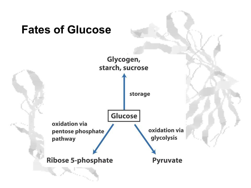 Fates of Glucose