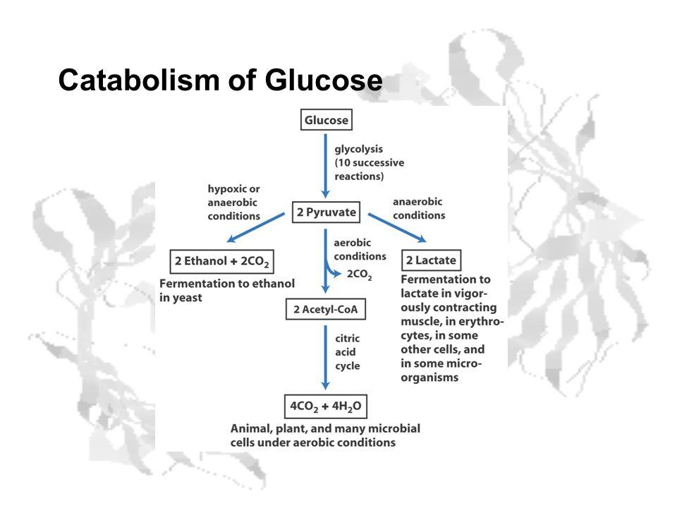 Catabolism of Glucose