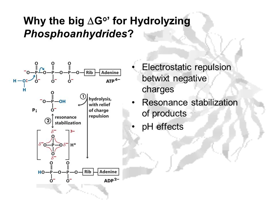 Why the big G o for Hydrolyzing Phosphoanhydrides? Electrostatic repulsion betwixt negative charges Resonance stabilization of products pH effects