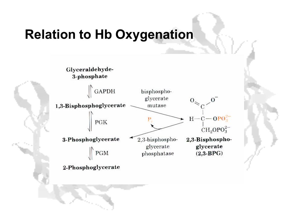 Relation to Hb Oxygenation