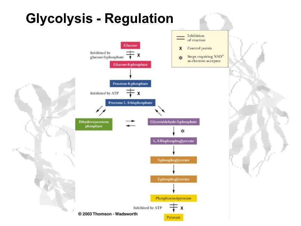 Glycolysis - Regulation