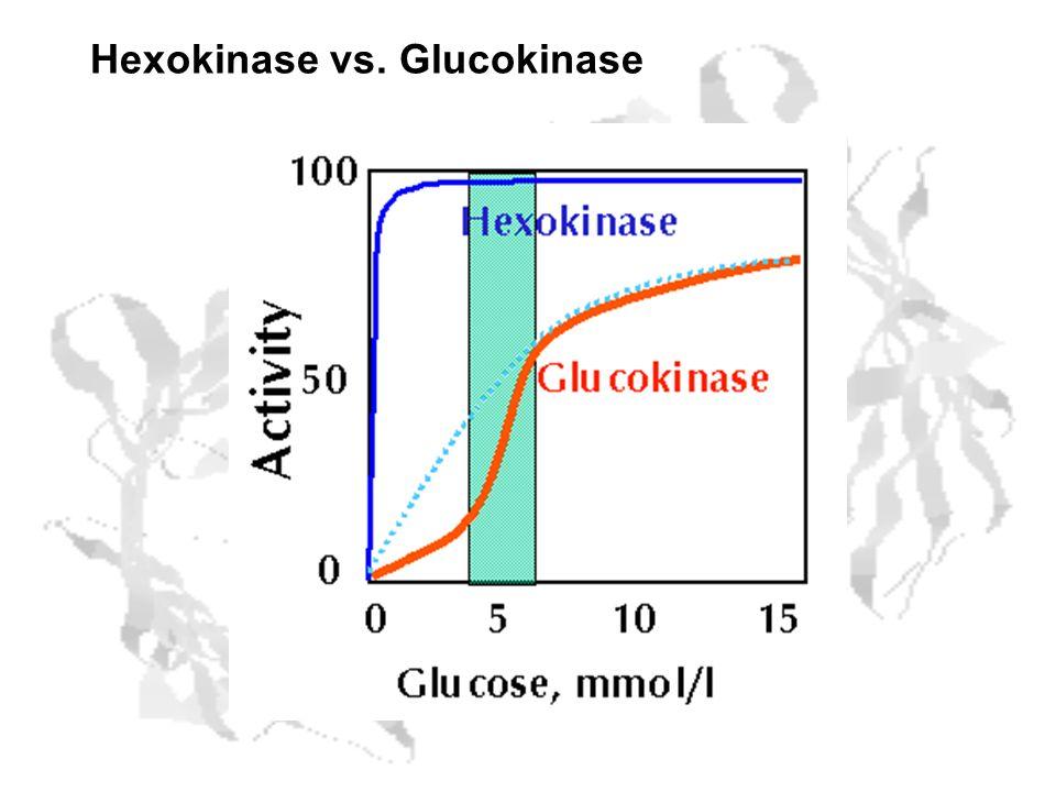 Hexokinase vs. Glucokinase