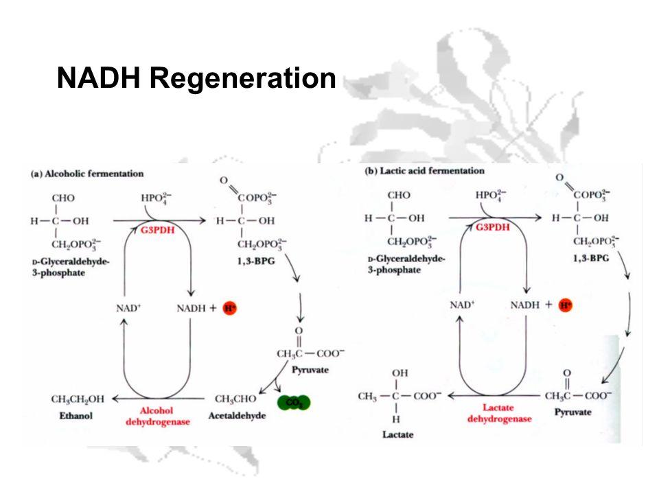 NADH Regeneration