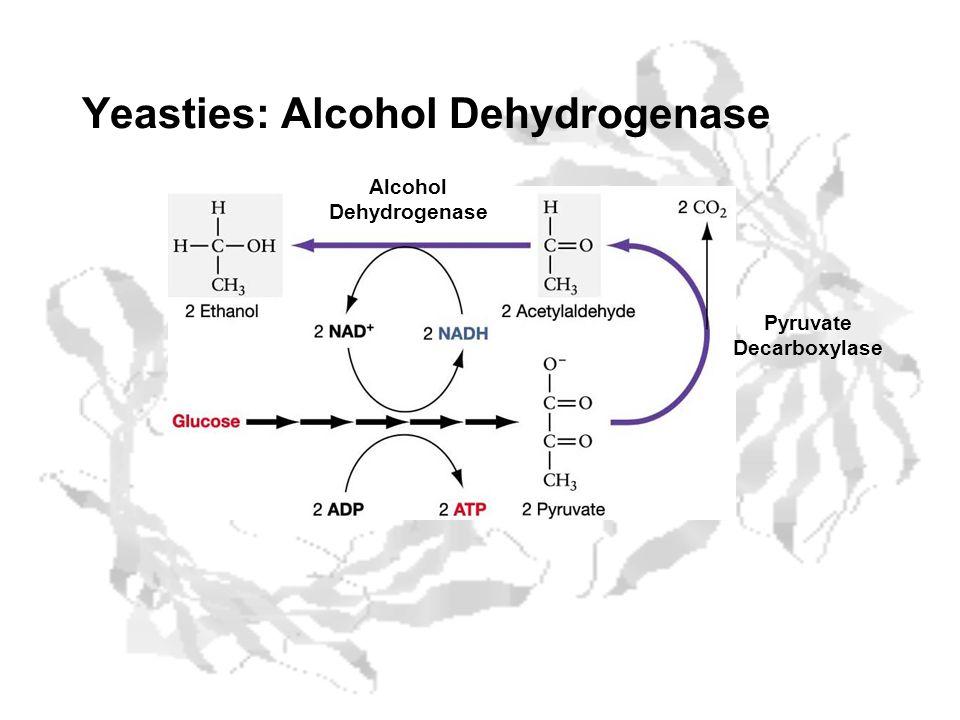 Yeasties: Alcohol Dehydrogenase Pyruvate Decarboxylase Alcohol Dehydrogenase