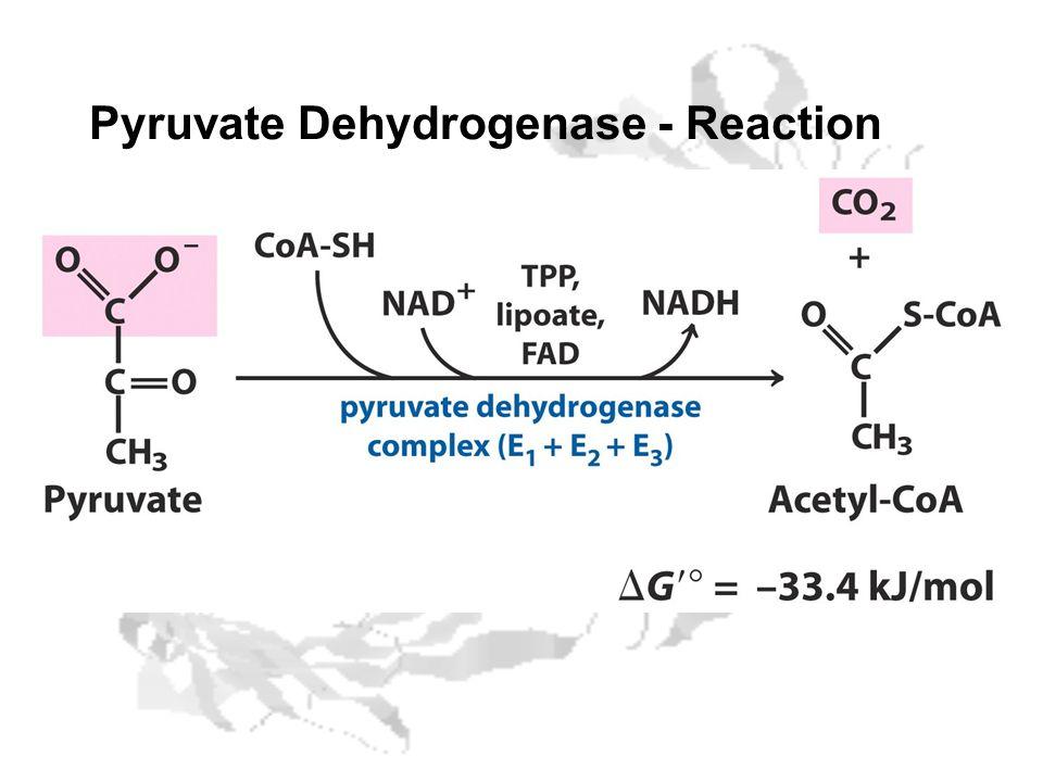 Pyruvate Dehydrogenase - Reaction