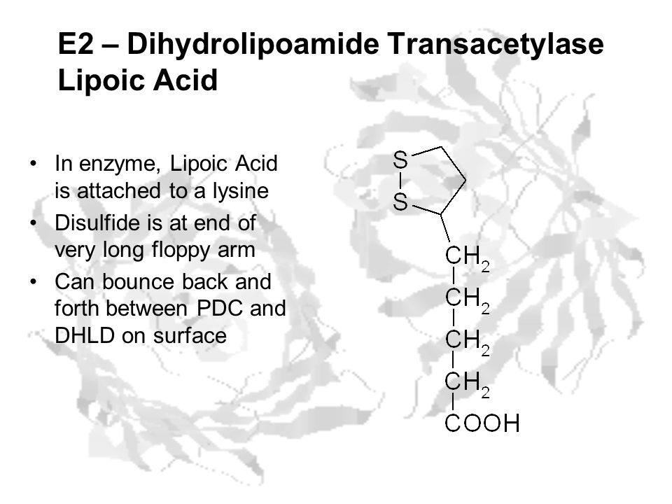 E2 – Dihydrolipoamide Transacetylase Lipoic Acid In enzyme, Lipoic Acid is attached to a lysine Disulfide is at end of very long floppy arm Can bounce