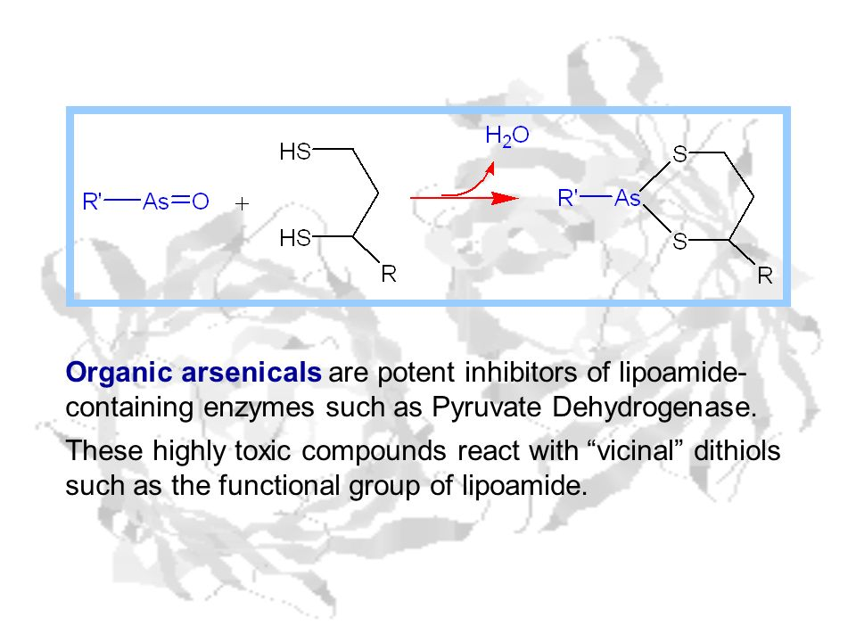 Organic arsenicals are potent inhibitors of lipoamide- containing enzymes such as Pyruvate Dehydrogenase. These highly toxic compounds react with vici