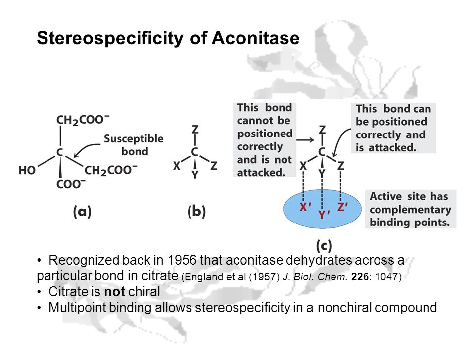 Stereospecificity of Aconitase Recognized back in 1956 that aconitase dehydrates across a particular bond in citrate (England et al (1957) J. Biol. Ch