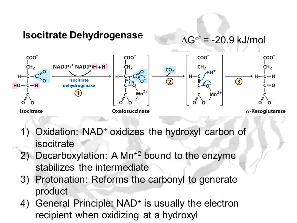 1)Oxidation: NAD + oxidizes the hydroxyl carbon of isocitrate 2)Decarboxylation: A Mn +2 bound to the enzyme stabilizes the intermediate 3)Protonation
