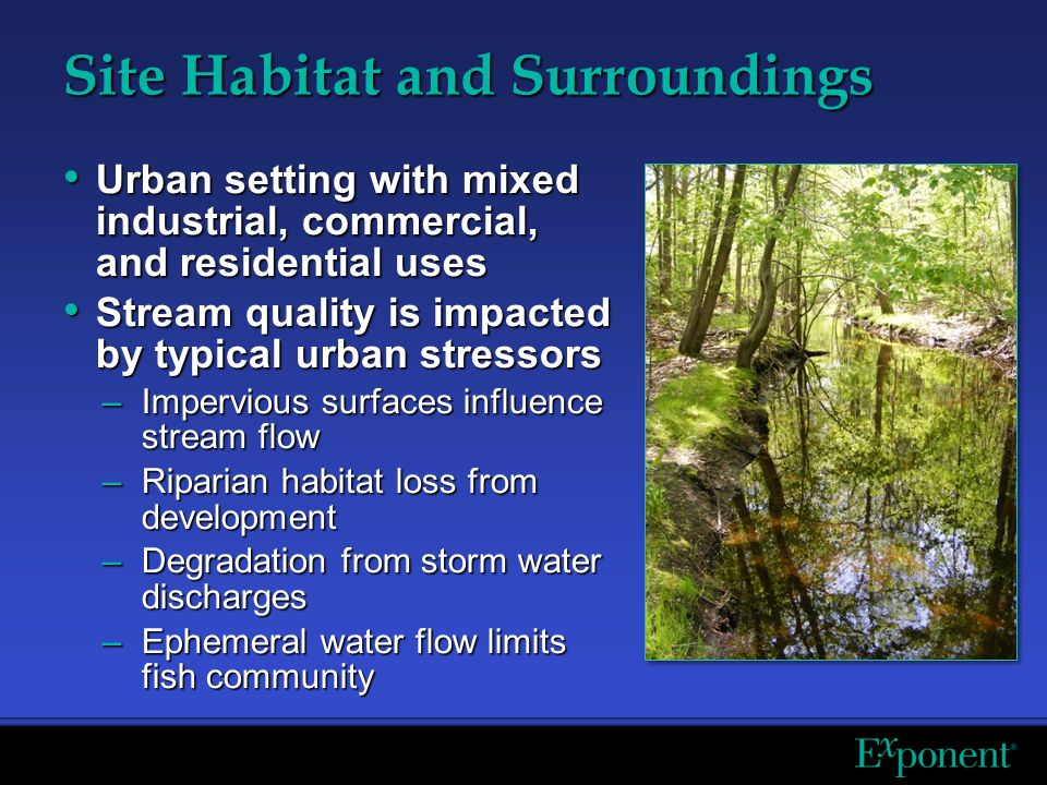 Site Habitat and Surroundings Urban setting with mixed industrial, commercial, and residential uses Urban setting with mixed industrial, commercial, and residential uses Stream quality is impacted by typical urban stressors Stream quality is impacted by typical urban stressors –Impervious surfaces influence stream flow –Riparian habitat loss from development –Degradation from storm water discharges –Ephemeral water flow limits fish community