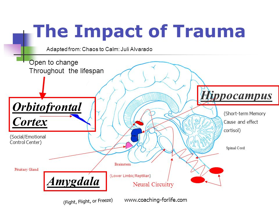 Trauma Informed Interventions 2 If there is no relationship nothing else matters If you do not have it, you cannot give it Respond vs React Your Fear will not become my fear Consistent Calm evokes Change Compassion before Competition Stress Modification not Behavior Modification Slow and Low Stop Drop and roll www.coaching-forlife.com