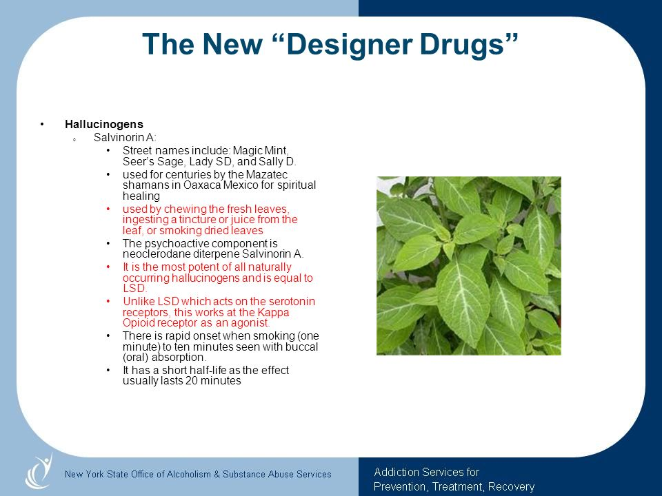 The New Designer Drugs Hallucinogens o Salvinorin A: Street names include: Magic Mint, Seers Sage, Lady SD, and Sally D. used for centuries by the Maz